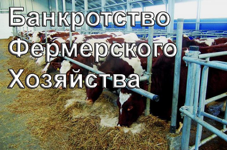 банкротство главы крестьянского фермерского хозяйства