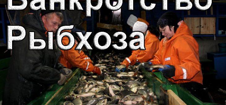 Банкротство рыбхоза