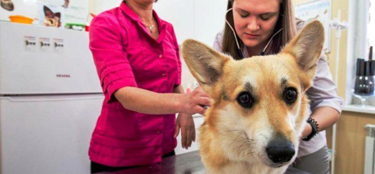 Банкротство ветеринарной клиники